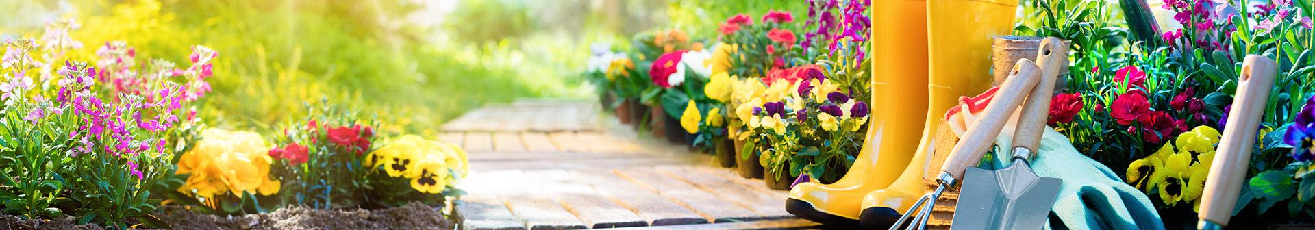 beet-und-balkonblumen_gaertnerei_erlangen