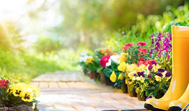Sommerblumen für Beet- und Balkon kaufen in Erlangen