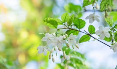 Blüten- und Laubsträucher