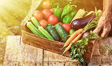 Gemüsepflanzen kaufen in Ihrer Gärtnerei in Erlangen
