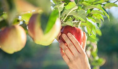 Obstbäume Obstpflanzen kaufen Baumschule Erlangen